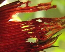Причины появления плавниковой гнили у аквариумных рыб: симптомы, лечение, профилактика